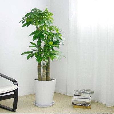 东莞哪里买盆栽植物 东莞哪里买盆栽便宜