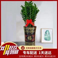 東莞辦公室植物購買 東莞辦公室植物批發