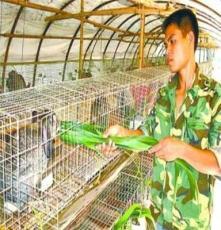 野兔野兔價格¥野兔養殖A野兔養殖場