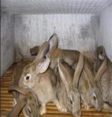 野兔山東鑫億牧業供應北京野兔養殖場