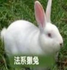 大中小供應獺兔種兔,長毛兔