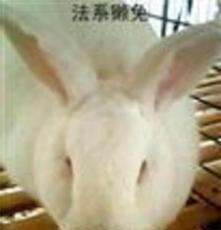 供應如:野兔野兔野兔野兔價格肉兔獺兔場