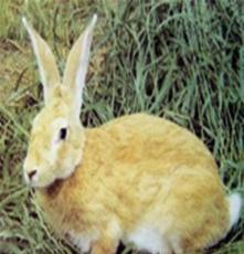 供應如:獺兔獺兔獺兔場肉兔價格野兔行情