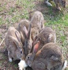 野兔場野兔圖片野兔價格