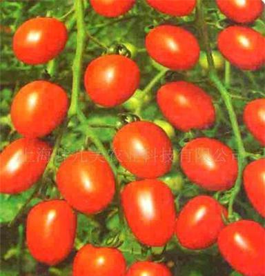 廣西西紅柿 百色西紅柿