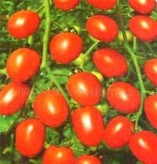 田陽西紅柿 田陽圣女果 田陽小番茄