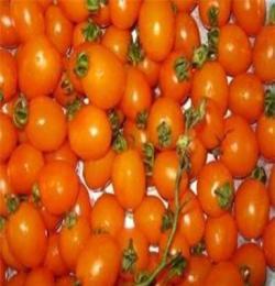 田陽小番茄 田陽圣女果 田陽西紅柿大量供應
