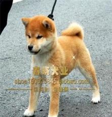 純種金毛寵物店 杭州寵物狗市場