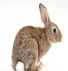 武漢肉兔養殖前景