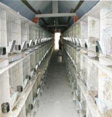 山西肉兔養殖前景