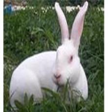 河南商丘獺兔養殖