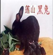 廣西黑兔養殖前景