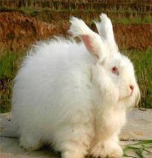 供應獺兔場建設獺兔價格獺兔場