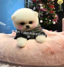 寵物幼犬購買 博美犬金毛 拉布拉多 哈士奇等幼犬