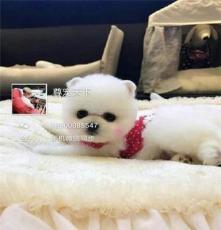 北京朝陽出售各種寵物犬