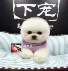 寵物犬購買 博美 拉布拉多 金毛 法斗 等