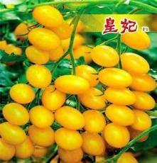 西紅柿批發 供應西紅柿 大量供應西紅柿