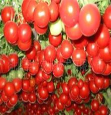 小番茄,红,甜