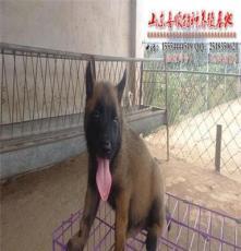 蛟河市馬犬圖片