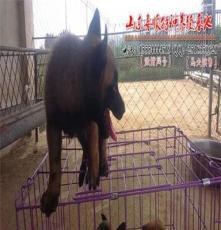 高新技術開發區馬犬采購價格