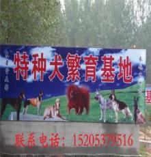 山東省煙臺市棲霞市牧羊犬養殖技術幼犬價格