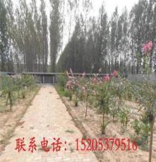 重慶省奉節縣平安鄉牧羊犬養殖技術幼犬價格