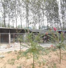 淄博市出售會逮兔的格力犬價格面議飼養技術