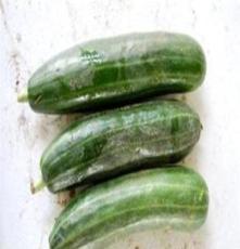 新鲜无公害蔬菜 脆瓜 野菜
