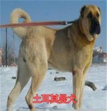 永豐哈士奇犬,吉娃娃犬,雪納瑞犬優質供應商,價格優惠