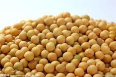 采購大量大豆玉米
