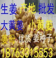 中国生姜种苗批发网
