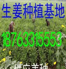 湖南生姜批发基地生姜供应产地价格