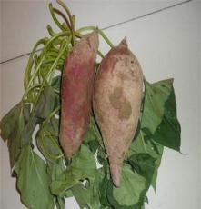 2013年湖南长沙浏阳特产 新货新鲜红薯 紫薯 地瓜 现货批发
