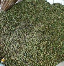 大量供應優質茶葉籽 青茶籽