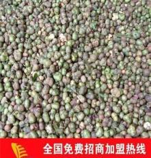 大量供应油茶籽仁 油茶籽 青茶籽 茶叶种子 量大优惠