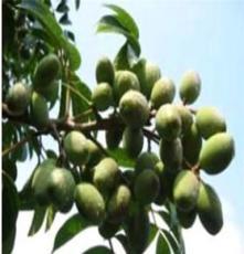 供應英國進口北星 橄欖油 護膚作用 廣州橄欖油價格