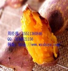 山西红薯批发,太原红薯价格