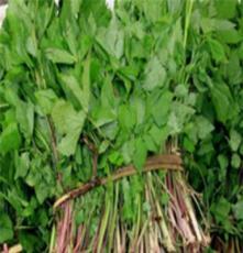 东北山野菜批发,大叶芹等山野菜,大量供应