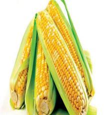 廠家直銷玉米  價格優惠