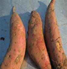 红香蕉 天然原生态 优质红薯 口感纯正香甜 绿色食品