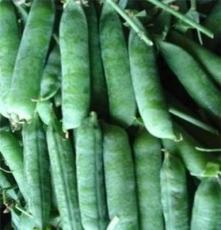 唐山新鲜甜豌豆荚 豌豆种子 优质中豌六号豌豆种 高产早熟大黄荚