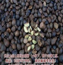 供应大别山高档油茶籽,数量有限,进来看图抢购