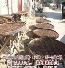 油茶籽 茶籽