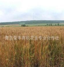 厂家直供优质有机黑小麦 品质保障欢迎订购