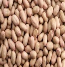 廠家直供優質花生米 花生米批發 歡迎訂購