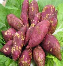 脱毒红薯5