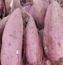 脱毒红薯4