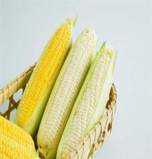 苏州宏润鸿一站式配送 玉米