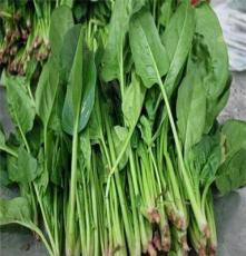 菠菜-蘇州宏鴻農產品一站式食堂配送