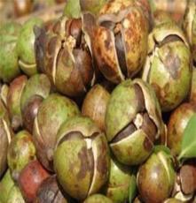 大量供应可直接加工野生山茶籽
